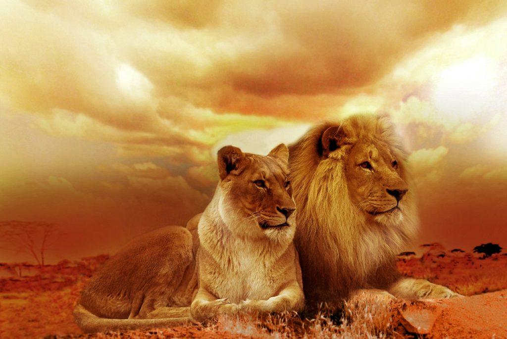 The-lion-king-3D-Live-Action